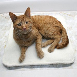 HAND CRAFTED Off White Fluffy Padded Cat Dog Mat